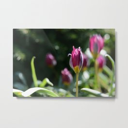 Sprouting Beauty Metal Print