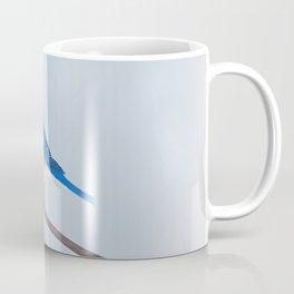 male eastern bluebird portrait Coffee Mug