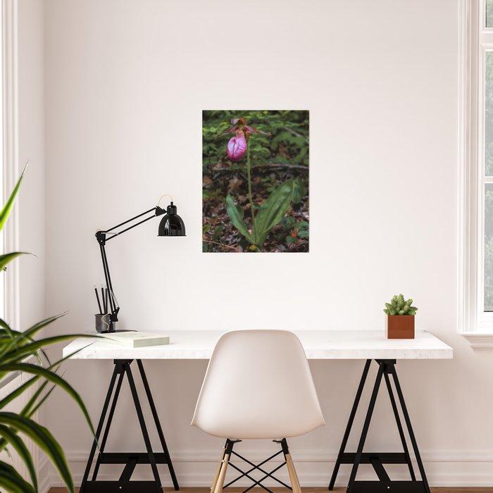 Wild Lady Slipper Flower Poster