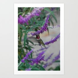 Humming Bird in Flight Art Print