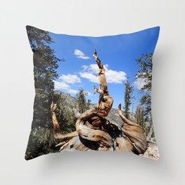 Ancient bristlecone tree Throw Pillow