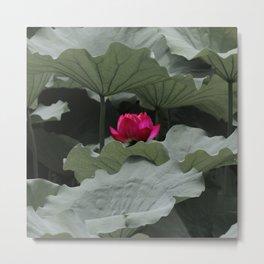 Nature's Pink Metal Print