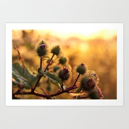thistle with morning dew Art Print