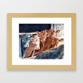 Calves at Brunch Framed Art Print