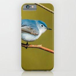 Teeny-Tiny Bird, Blue-Gray Gnatcatcher Photograph iPhone Case