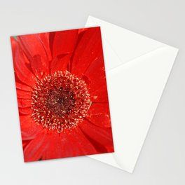 Red Daisy Stationery Cards