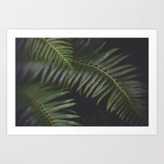 Woodland Ferns Art Print