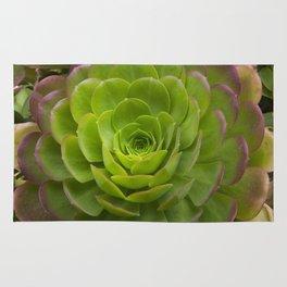 Aeonium virgineum Rug