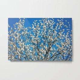 Spring Blossom VI Metal Print