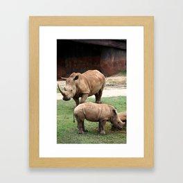 Rhinos Framed Art Print