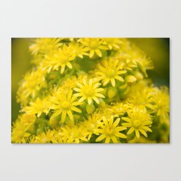 Dreamy Spiral Yellow Flowers Canvas Print