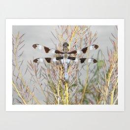 dragonfly tank Art Print
