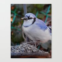 jay fleck Canvas Prints featuring Jay by ACamp
