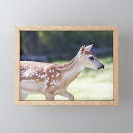 Fallow Deer Fawn 3 Framed Mini Art Print
