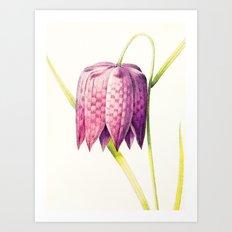 VIII. Vintage Flowers Botanical Print by Pierre-Joseph Redouté - Lilac Tulip Art Print