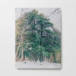 The woods in the winter Metal Print