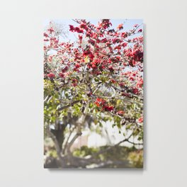 Red Cotton Tree Metal Print