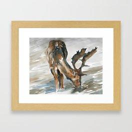 deer#2 Framed Art Print