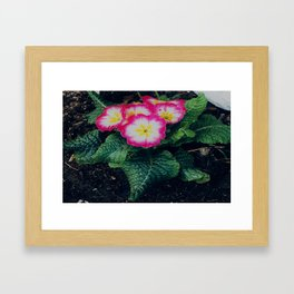 Spring time Framed Art Print