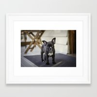 frog Framed Art Prints featuring Frog by Carol Knudsen Photographic Artist