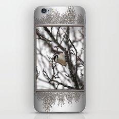 Winter Windblown Black-Capped Chickadee iPhone & iPod Skin