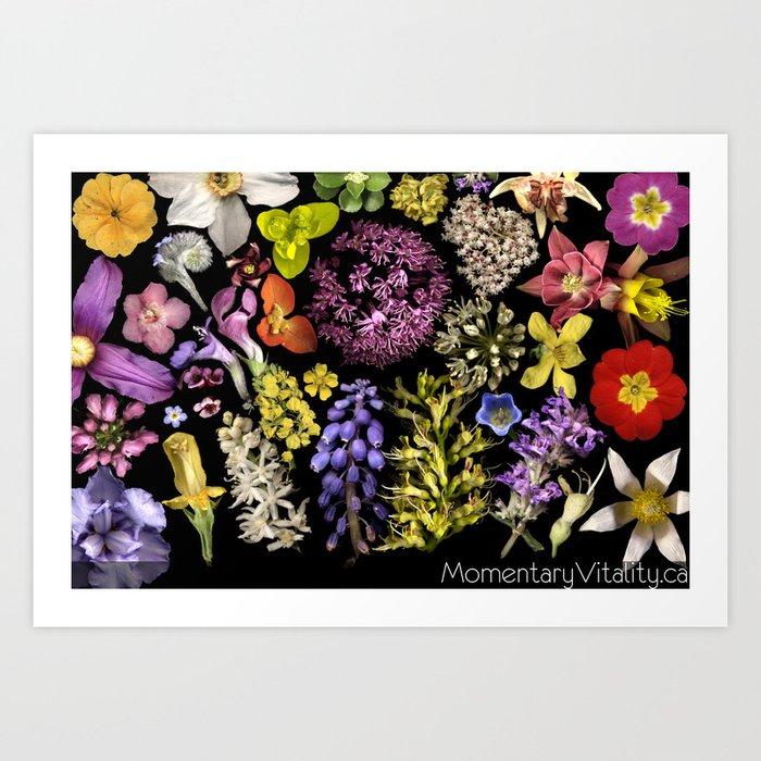 Radiant Onion Art Print