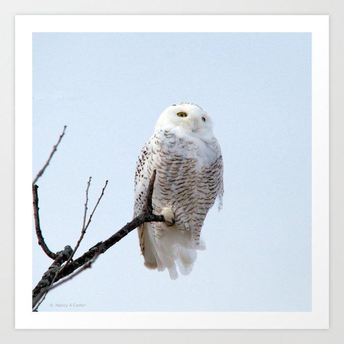 Lofty Vision (Snowy Owl) Art Print
