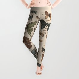 Butterflies and Moth Specimens Leggings