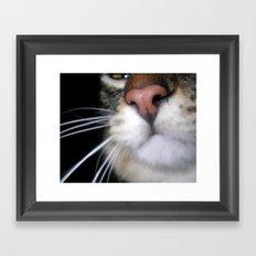 Kitty Nose Framed Art Print