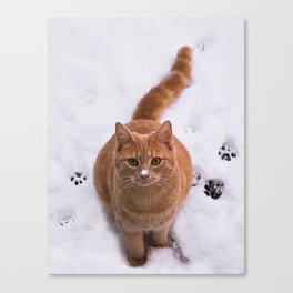 Ginger Kitty Discovers Snow! Canvas Print