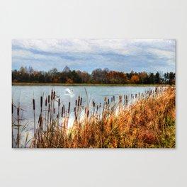Autumn Swan Canvas Print