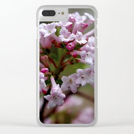 Beautiful Spring Blossoms - Koreanspice Viburnum Clear iPhone Case