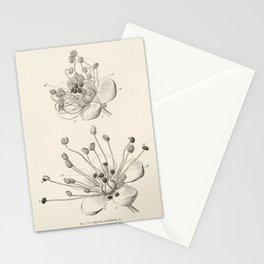 Flower Botany Stationery Cards