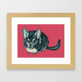 Chinchilla on red Framed Art Print