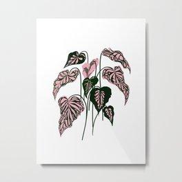 Pink and Green indoor Plant Caladium - home decor Metal Print