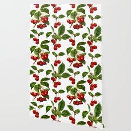 Vintage Botanical Cherries Print on White Wallpaper