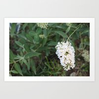 rileigh smirl Art Prints featuring Daisies by Rileigh Smirl