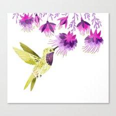 Lucifer Hummingbird Canvas Print