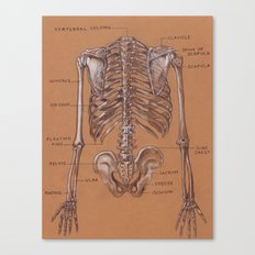 Jesse Young's Human Anatomy Drawing of Skeletal Structure of the Torso (Circa 2005) Canvas Print
