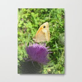 Butterfly on a globe thistle Metal Print