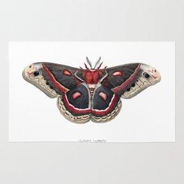 Cecropia Moth Rug