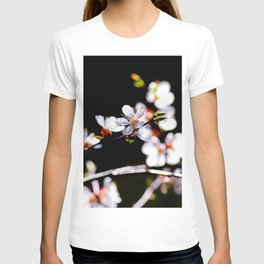 White Japanese Apricot Flowers Against The Black Background T-shirt