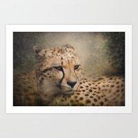 cheetah Art Prints featuring Cheetah  by Pauline Fowler ( Polly470 )