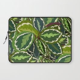 Calathea Prayer Plant Pattern Laptop Sleeve