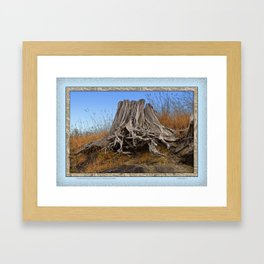 WEATHERED STUMP AND ROOTS ON BEACHSIDE BLUFF Framed Art Print