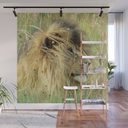 Leo Panthera African lion Wall Mural