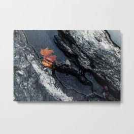 Last Leaf Metal Print