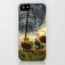 field of faded sunflowers  iPhone Case