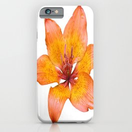 Coral Colored Lily Isolated on White iPhone Case