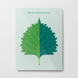 Shiso Leaf Green Metal Print